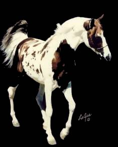 "Click here to view ""Hot Spotz"", Nominated National Show Horse, Nominated Sweepstakes Sire, Tested Homozygous.  Standing at Stud"